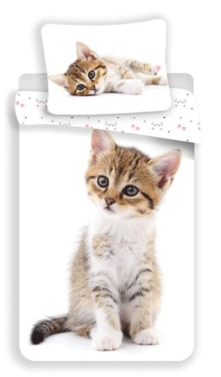 Obrázek z Povlečení fototisk Kitten white 140x200, 70x90 cm