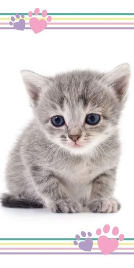 Obrázek z Osuška Koťátko color 70x140 cm