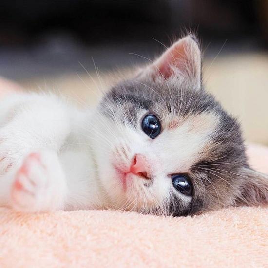 Obrázek z Povlak na polštářek Kitten 40x40 cm